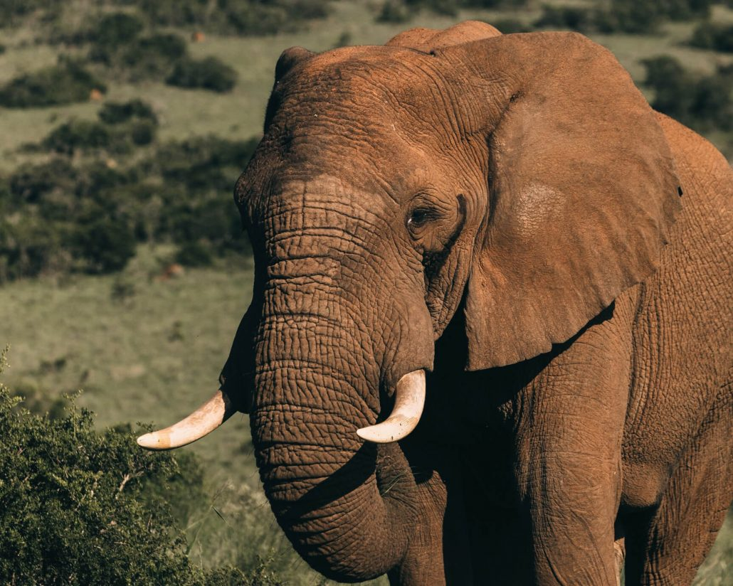 Brainbox Group — Elephants